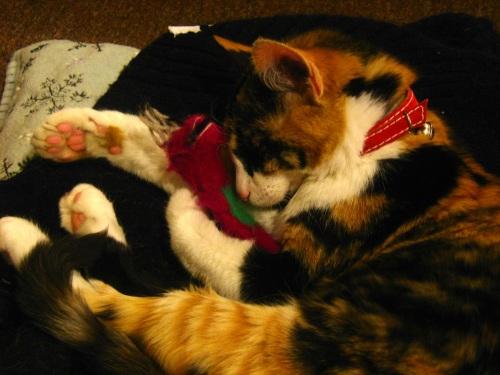 Cleo y barney